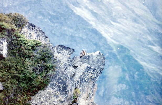 Begmarmot tijdens wandelreis in Zwitserland