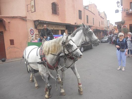 Paard met koets tijdens wandeling in Marrakesh in Marokko