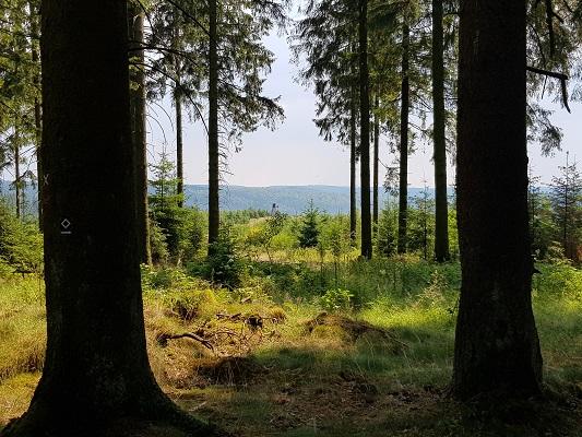 Doorkijkje in bossen tijdens wandeling van Jaghaus naar Thein-Weser-Turm op wandelreis over Rothaarsteige in Sauerland in Duitsland