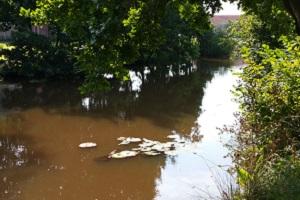 Ruiten Aa tijdens een wandeling over het Westerwoldepad in Groningen