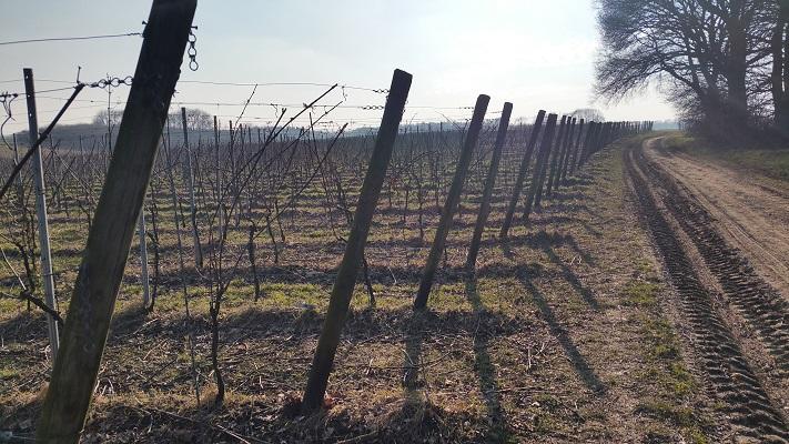 Zandweg langs wijngaarden tijdens wijnwandeling van Wanda Catsman in Groesbeek