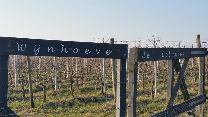 Wijnhoeve de Colonjes tijdens wijnwandeling van Wanda Catsman in Groesbeek