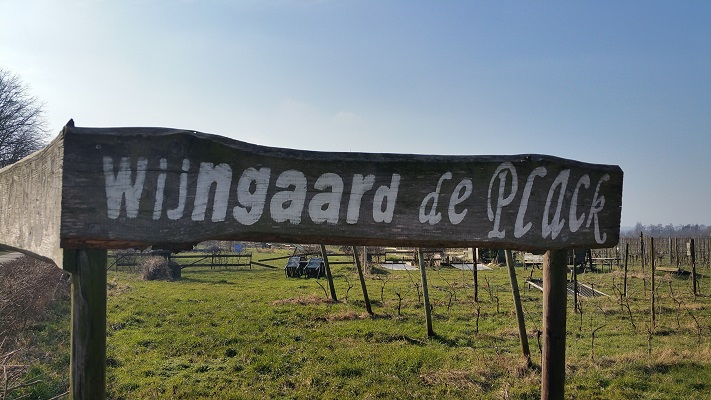 Wijngaard de Plack tijdens wijnwandeling van Wanda Catsman in Groesbeek