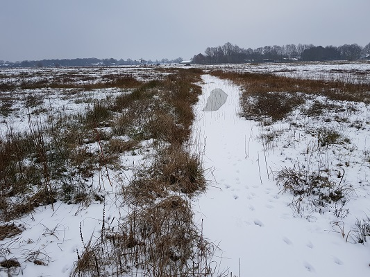 Blauwgraslanden tijdens IVN-wandeling Over Peelrandbreuk en wijstgronden in Uden