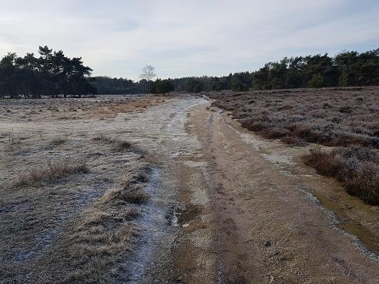 Wilhelminabossen op een wandeling over Klompenpad Molenbeeksepad bij Wolfheze