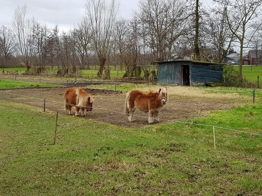 Pony's tijdens een ommetje Vorstenbosch, mijn geboorteplaats.