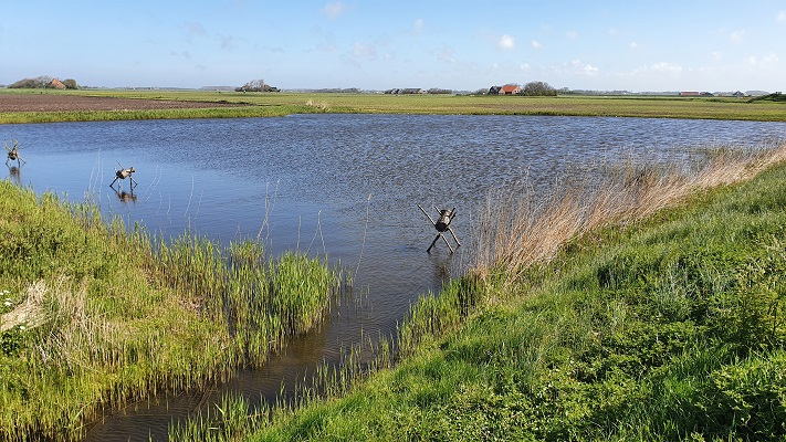 Wandeling van 't Horntje naar Oosterend op Texel