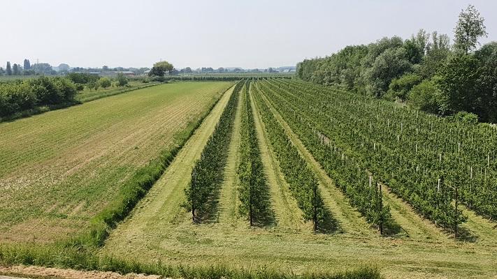 Groene Wissel Ophemert bij boomgaarden